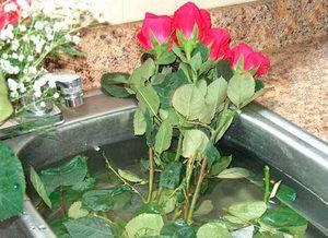 Как оживить цветы