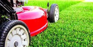 Когда лучше сажать газонную траву
