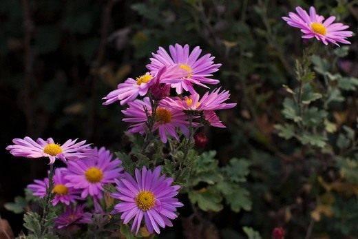 Какие цветы растут в тени