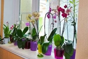 Во что сажать орхидею