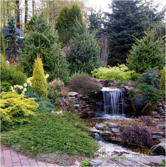 Низкорослые хвойные растения для сада