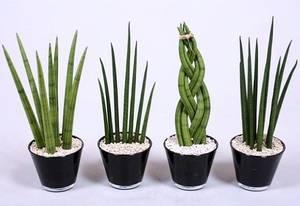 Тенелюбивые неприхотливые комнатные растения