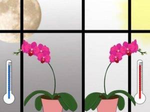 Пропадает орхидея