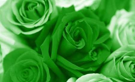 Красные и белые розы