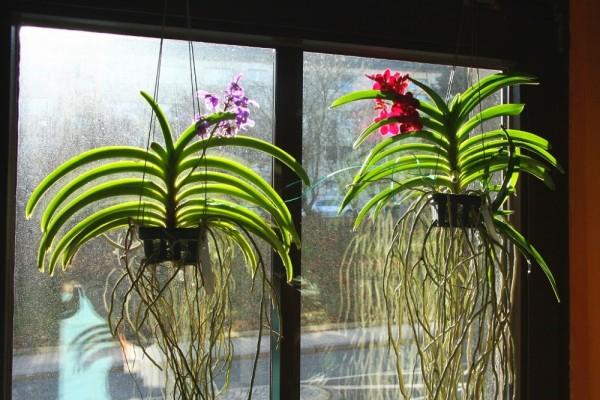 Почва для орхидей в домашних условиях