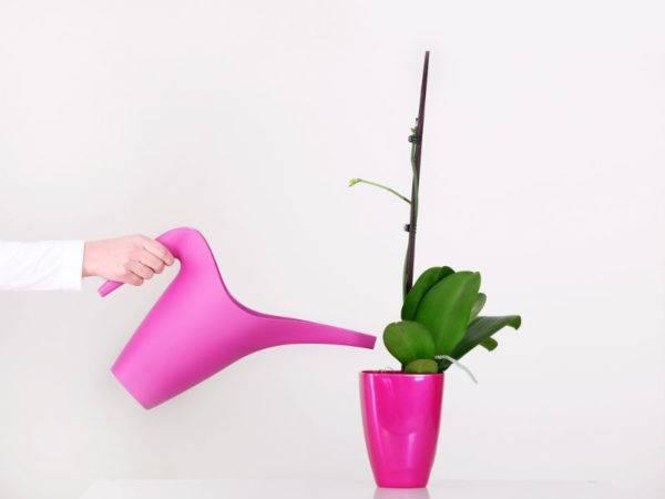 Сколько цветет орхидея в домашних условиях