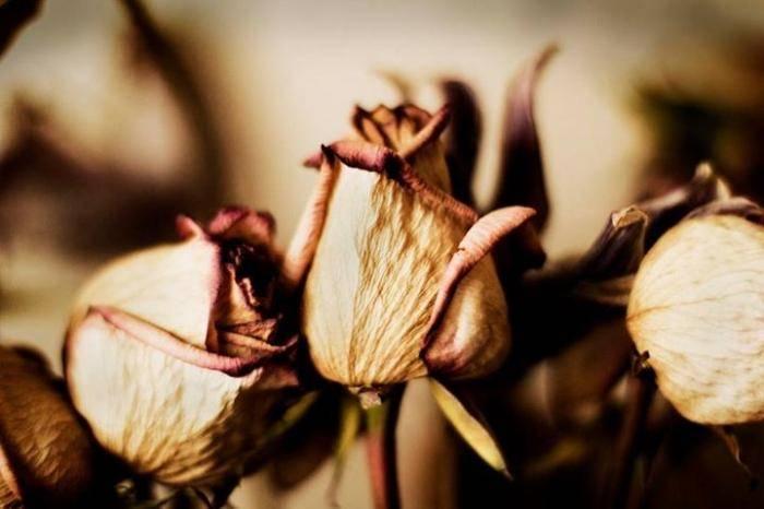 Как сделать так чтобы розы стояли дольше