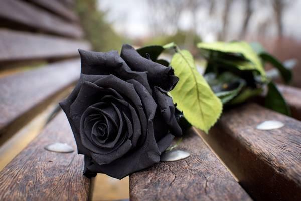 Бордовые розы значение