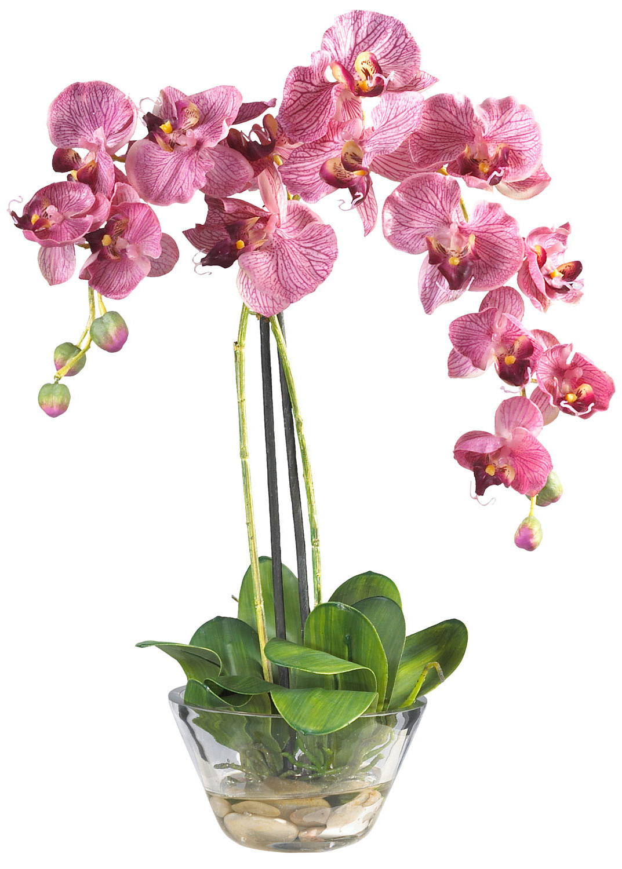 Как удобрять орхидеи