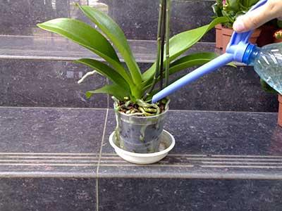 Пересаживание орхидей в домашних условиях