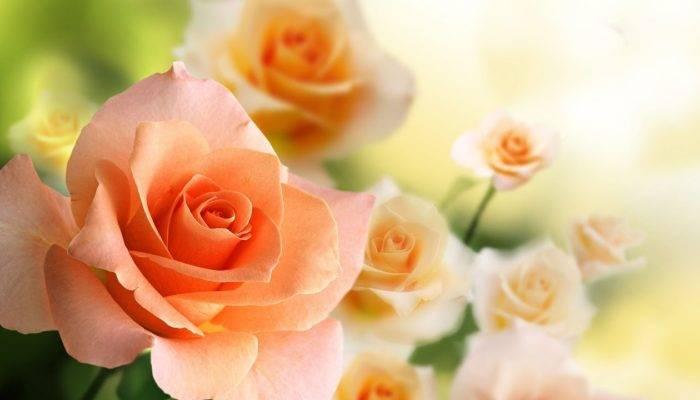 Как дольше сохранить букет роз в вазе