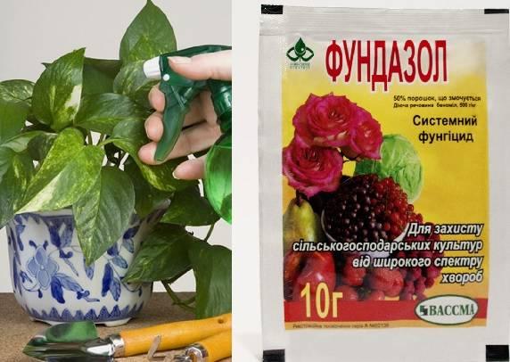 Препараты от мучнистой росы на цветах