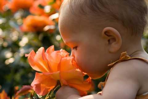 Цветы для детской комнаты какие полезны