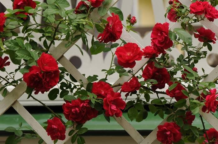 Подставка для розы плетистой своими руками
