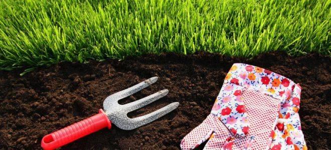 Когда можно садить газонную траву