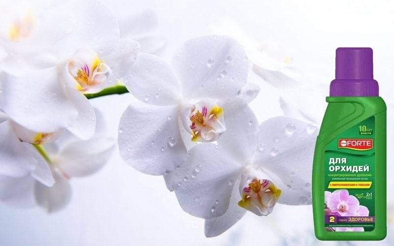 Бона форте для орхидей