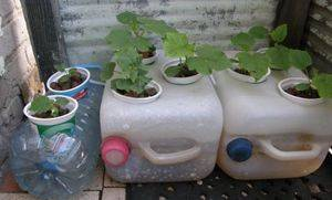 Как выращивать гидропонику