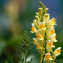 Желтый цветок название