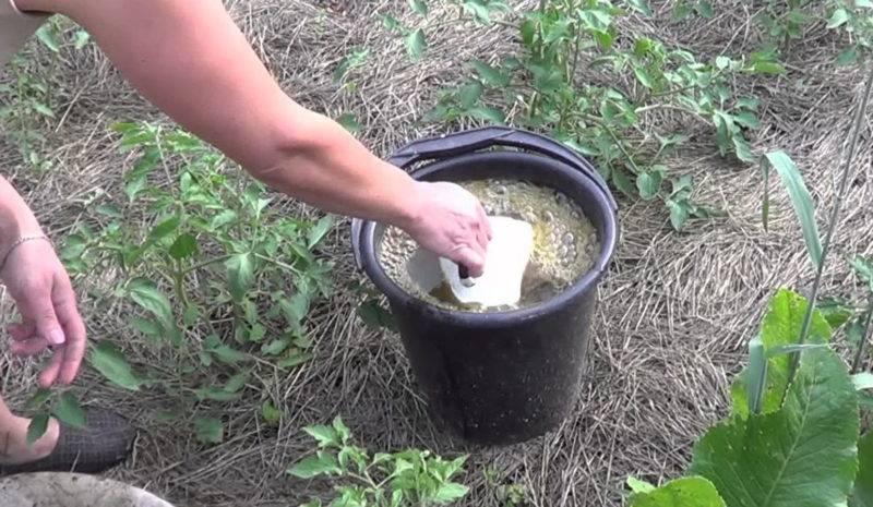 Как сделать дрожжевую подкормку для растений