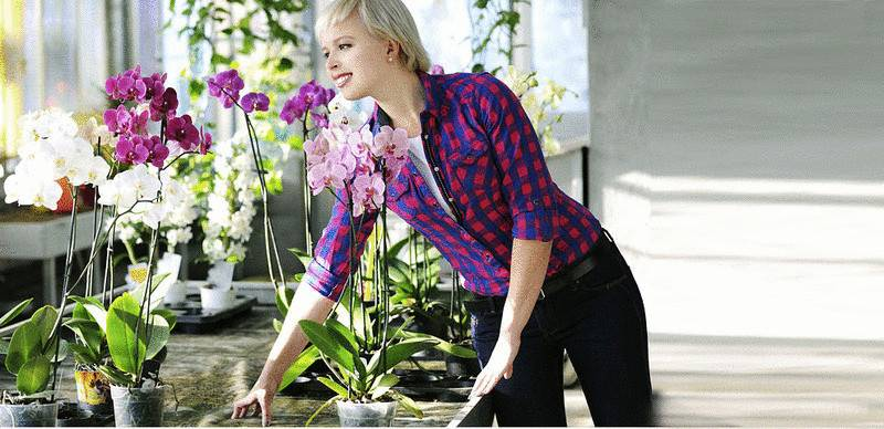 Когда надо пересаживать орхидею