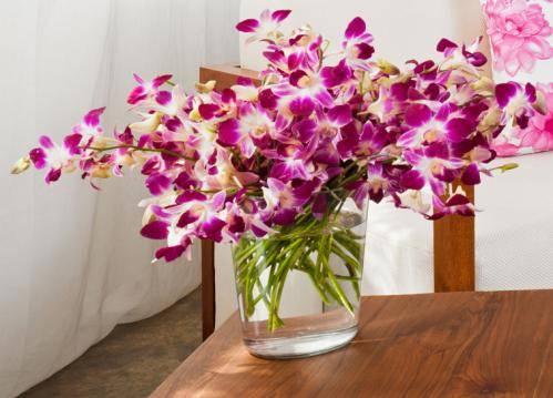 Сколько отдыхает орхидея после цветения