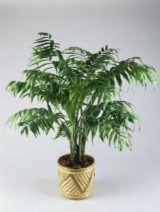 Большие домашние растения
