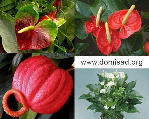 Красный цветок с желтым пестиком