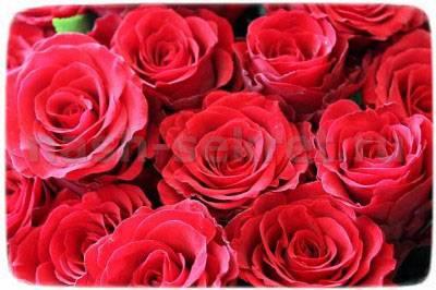Чтобы розы долго стояли в вазе