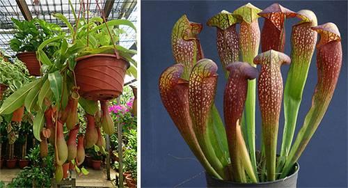 Необычные комнатные растения