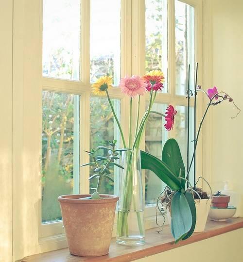 Комнатные цветы на подоконнике 38