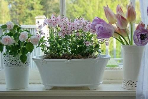 Комнатные цветы на подоконнике 183