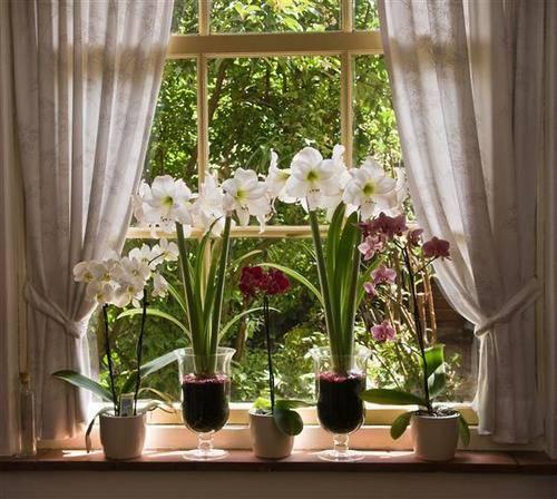 Комнатные цветы на подоконнике 67