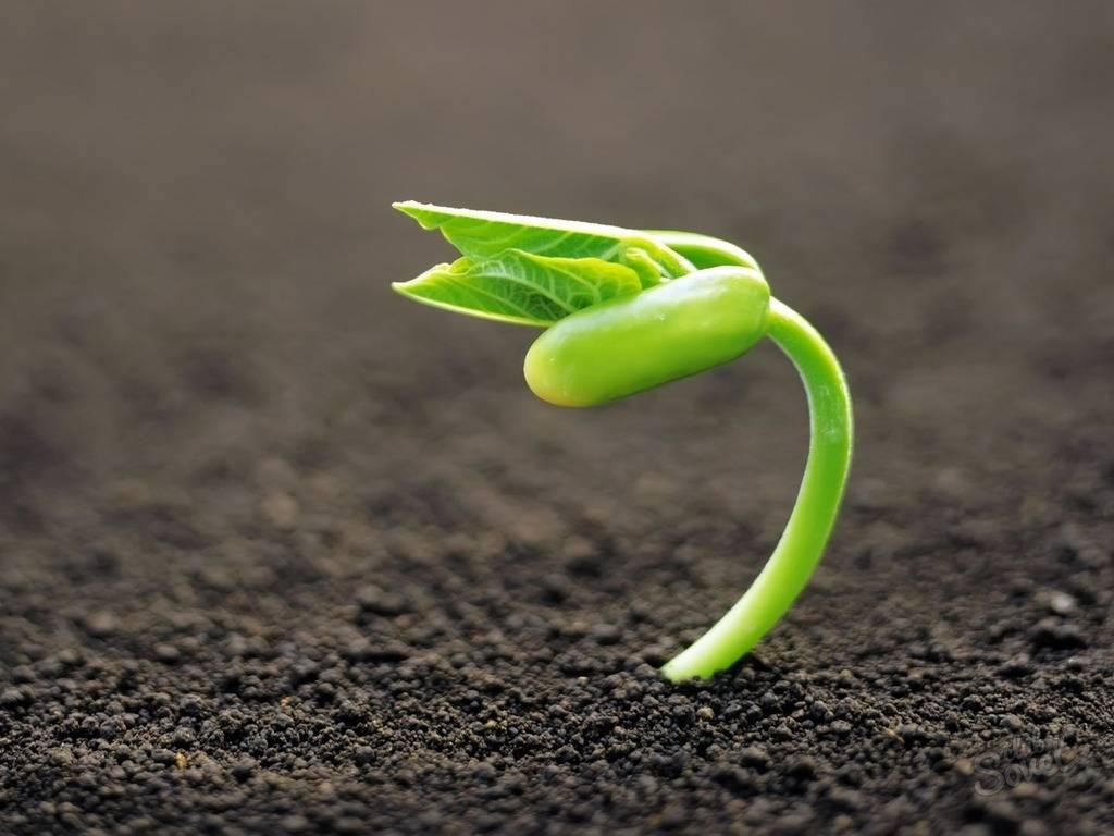Как восстановить плодородие почвы на садовом участке