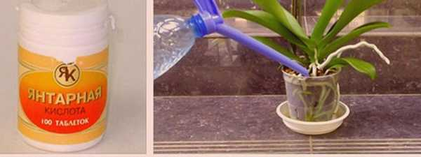 Янтарная кислота польза для растений