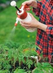 Янтарная кислота в садоводстве