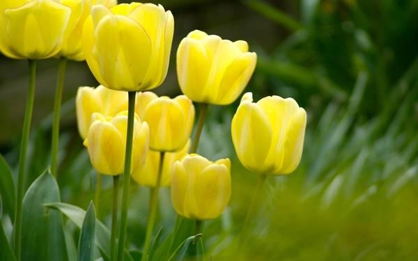 Маленькие желтые полевые цветочки название