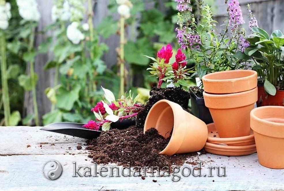 Пересадка комнатных растений благоприятные дни