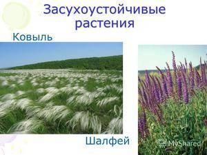 Описание неприхотливых растений