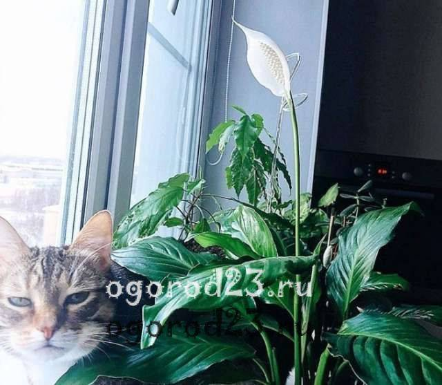 Опасные домашние растения