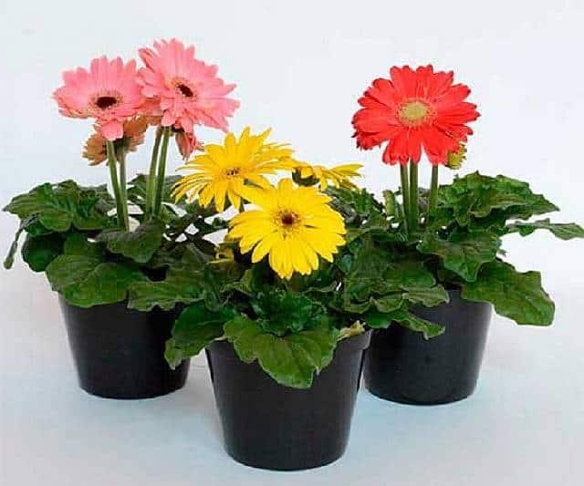 Популярные домашние цветы