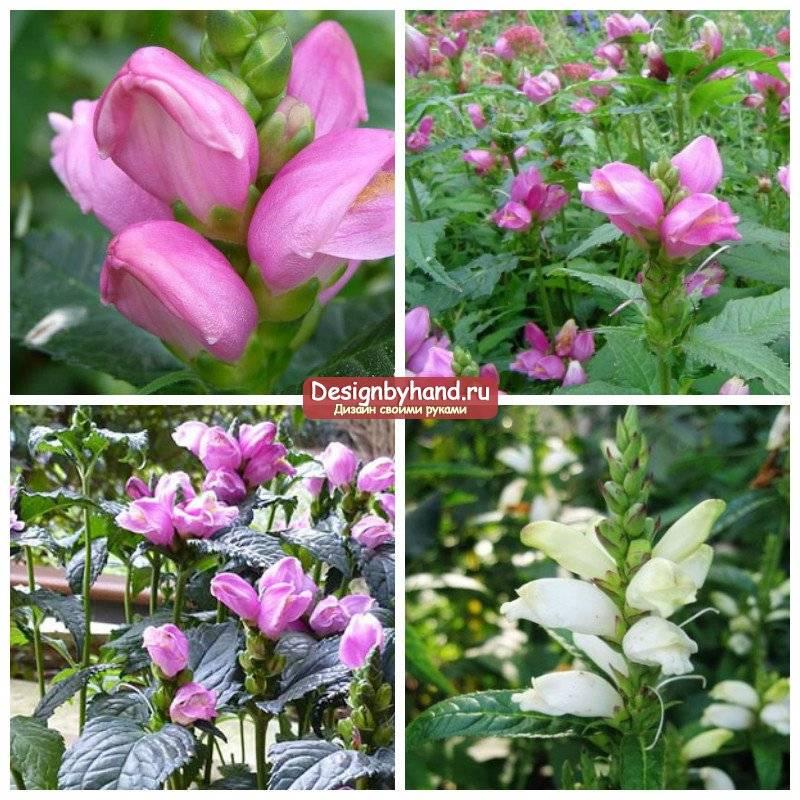 Садовые цветы цветущие