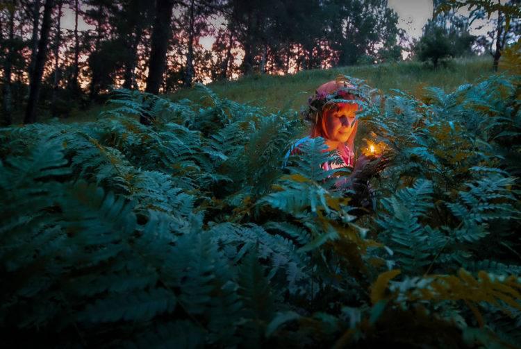 Иван да марья растение
