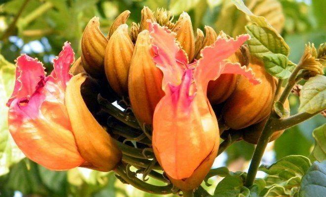 Экзотические домашние цветы