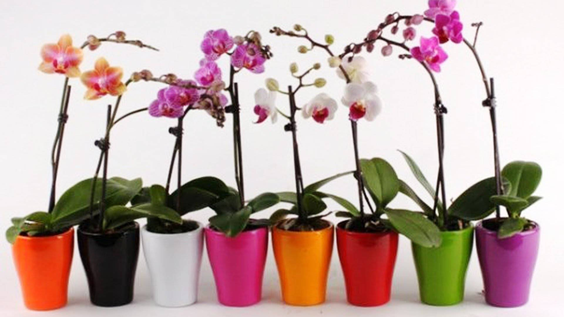 Как пересадить орхидею в домашних условиях пошаговое