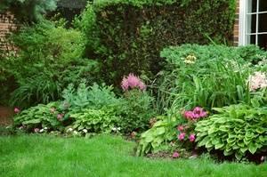 Теневыносливые цветы для сада