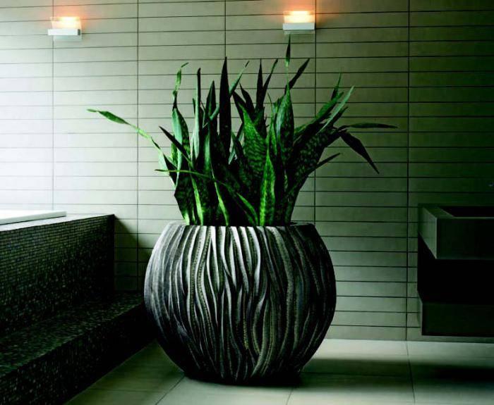 теневыносливые комнатные растения цветущие