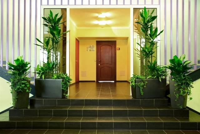 Цветы для коридора без окон