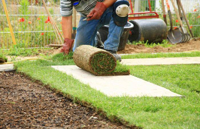 Как сеять газонную траву своими руками