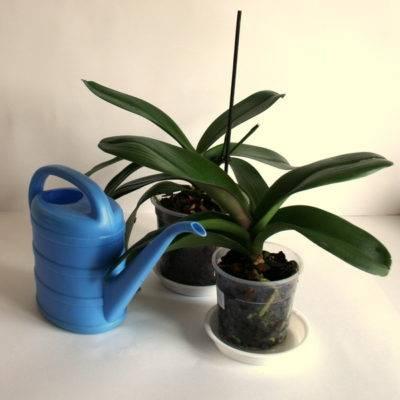 Что делать чтобы зацвела орхидея