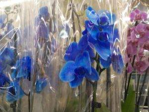 Коллекция голубой орхидеи